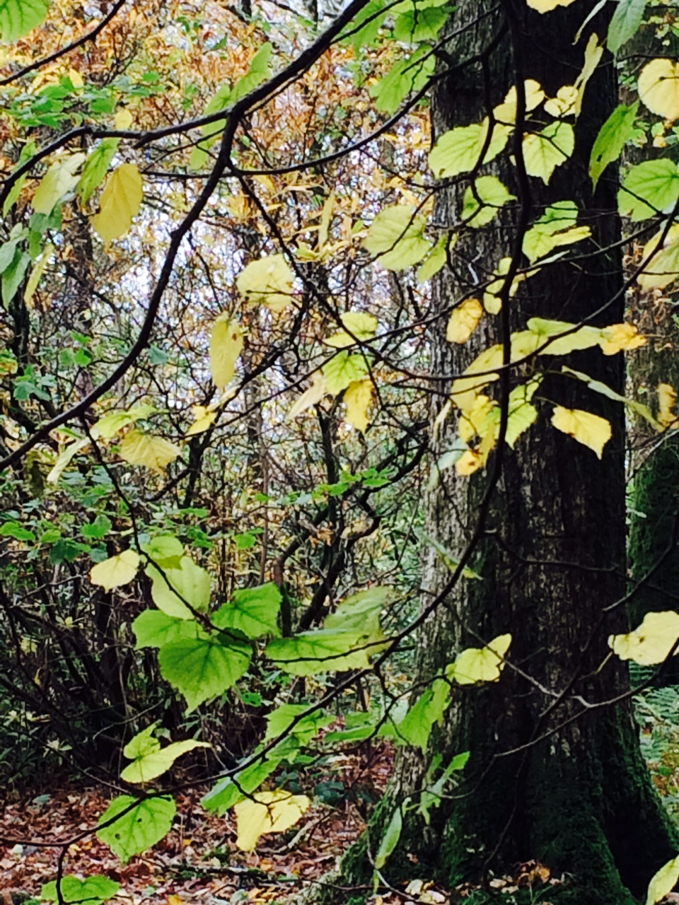Spacious Autumnal Leaves www.elementascoaching.com